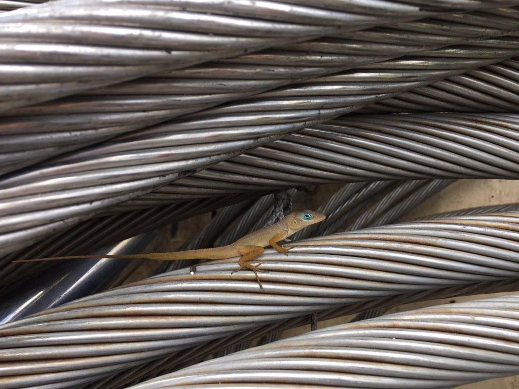 Veroeste kabels