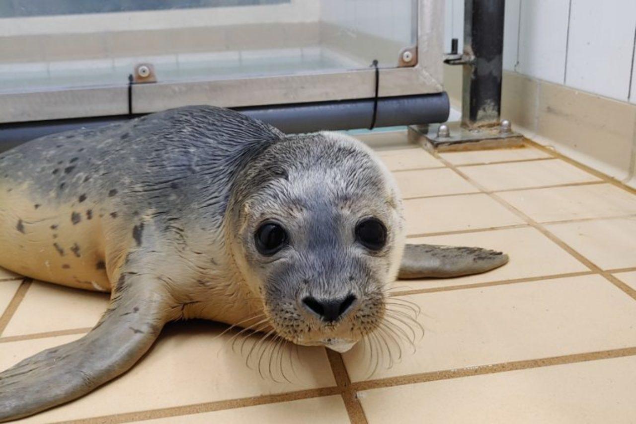 Zeehonden pup adoptie van CS.RIGGING in Zeehondencentrum Pieterburen
